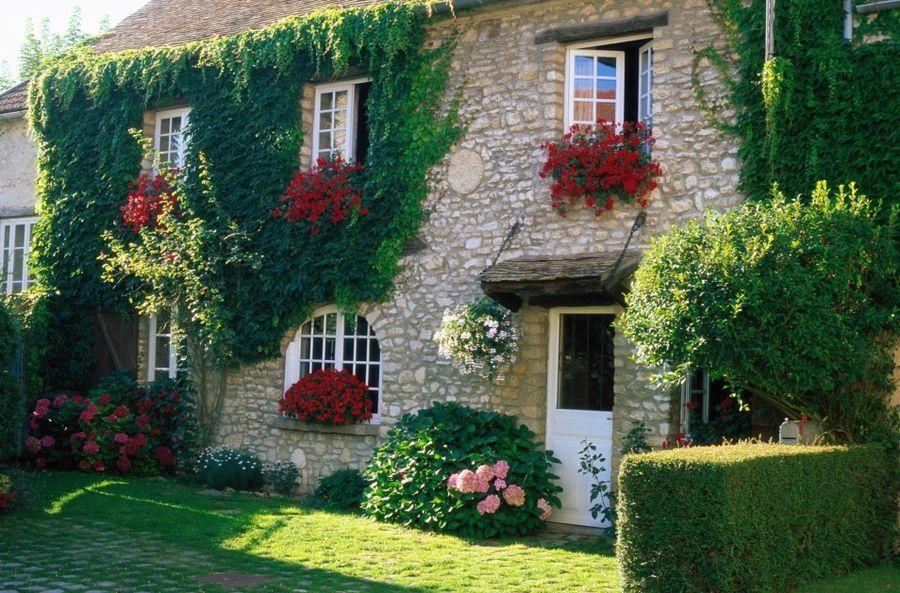 Озеленение фасада – его естественное украшение