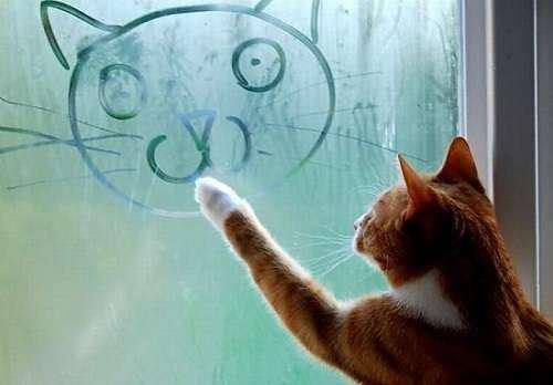 Давайте разберемся, почему зимой потеют пластиковые окна.