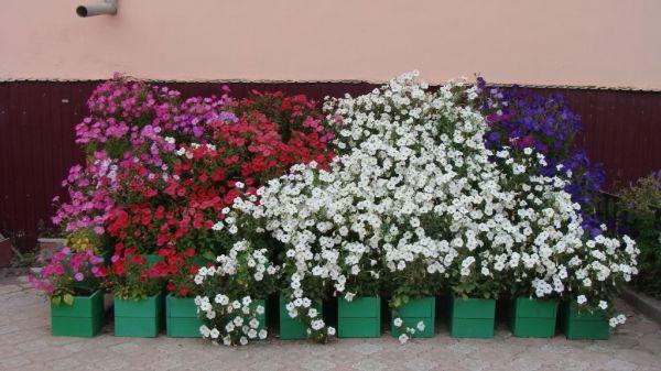украшение цветами фасада дома