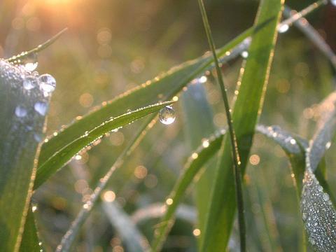 Выпадение росы на фото наблюдается в утренние часы, так как температура в это время минимальна.